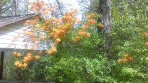 bush.1 4-17