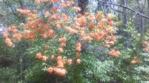 bush.2 4-17